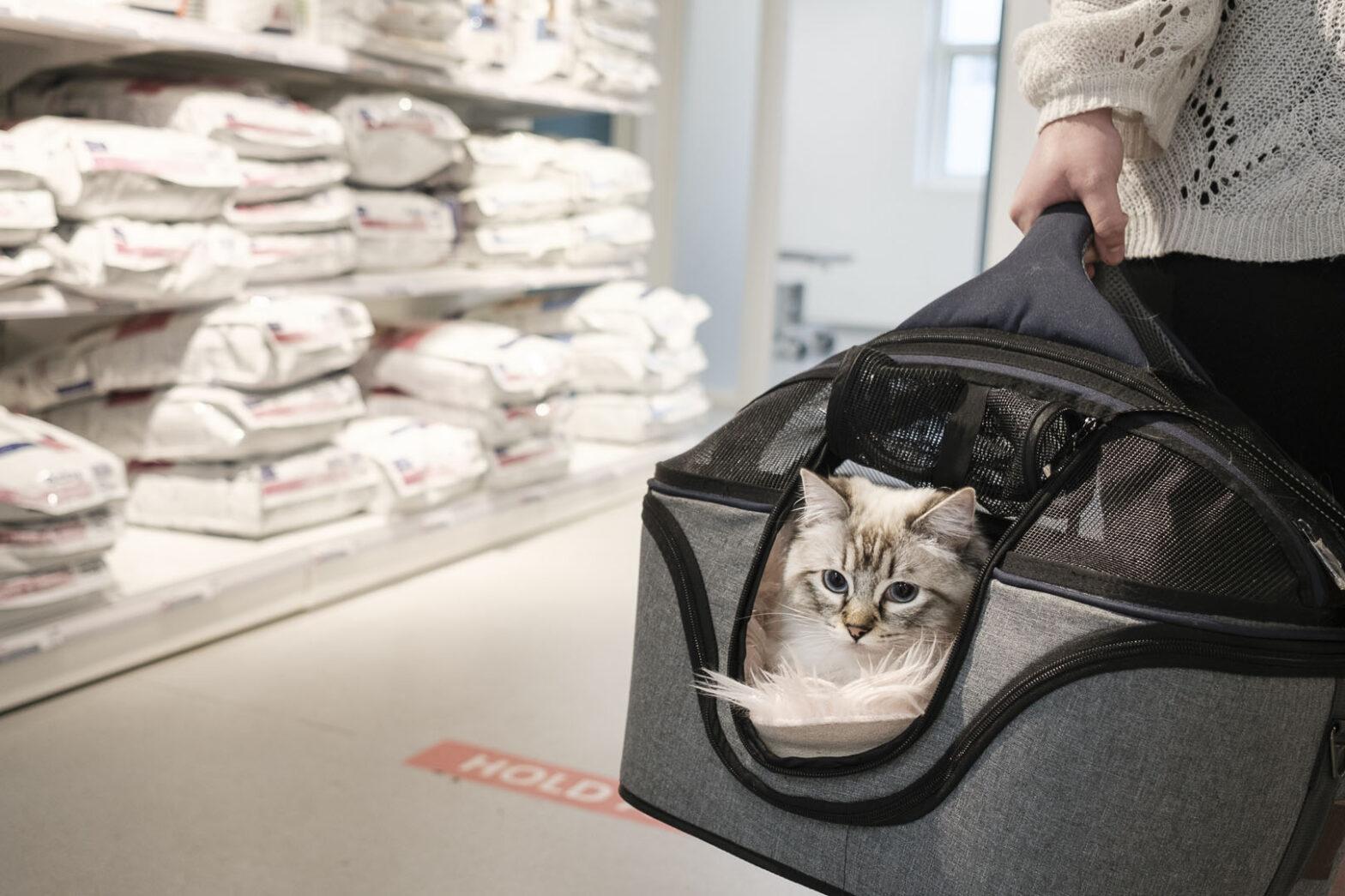 Operation og kikkertundersøgelse af kat   Dyrlægegruppen Dania