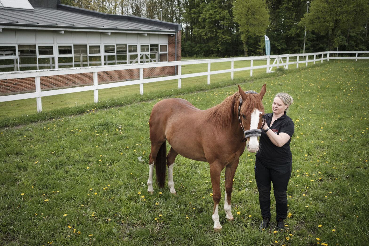Reproduktion hos hest: Brunstkontrol, inseminering, m.m. | Dyrlægegruppen Dania