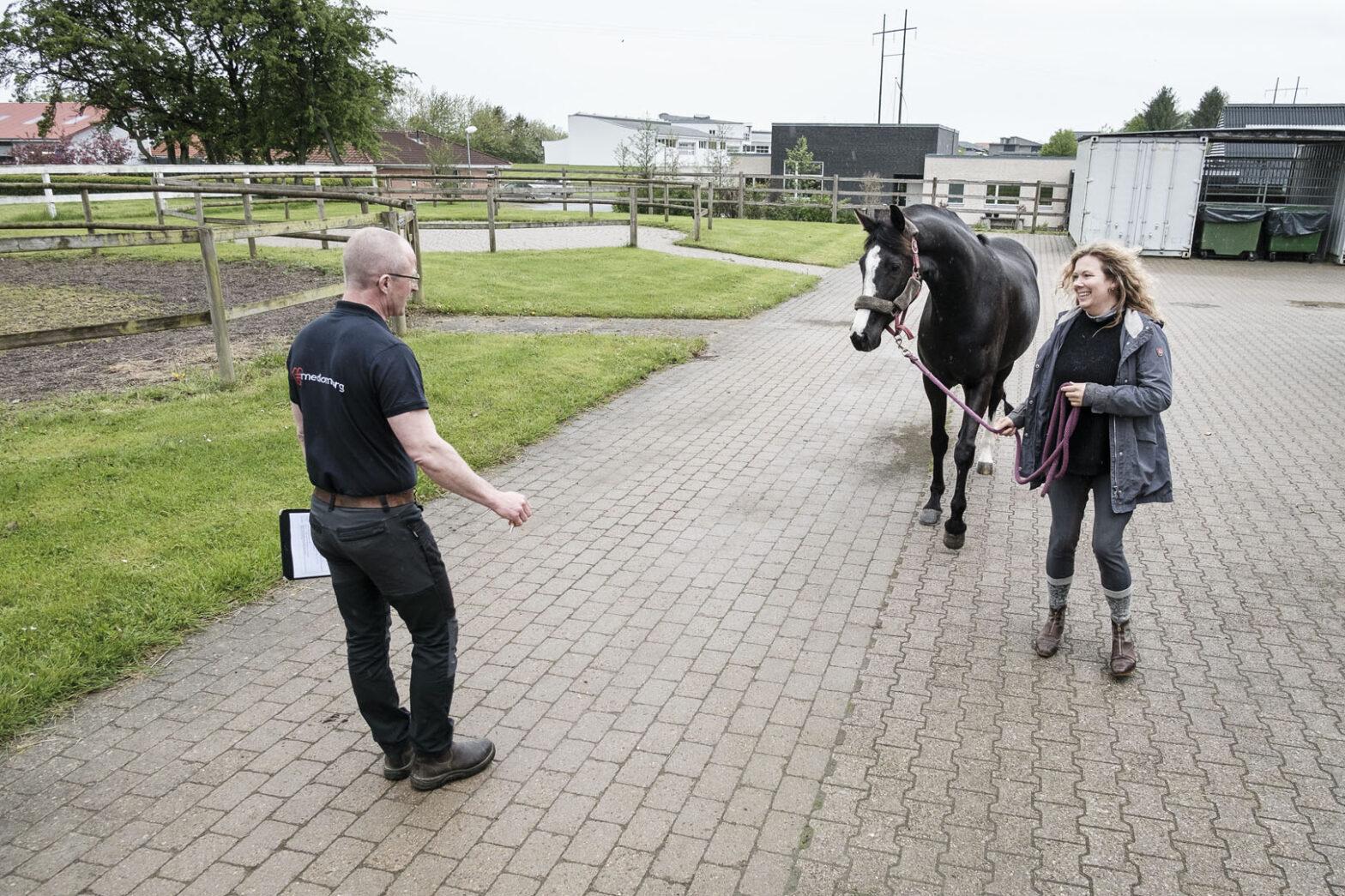 Foling hos hest: Råd og vejledning – døgnvagt | Dyrlægegruppen Dania